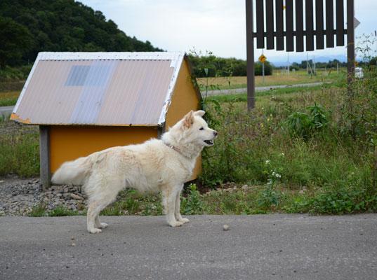 犬sakura